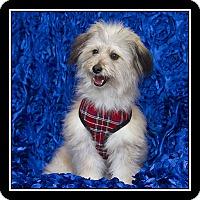 Adopt A Pet :: Ashton - San Diego, CA