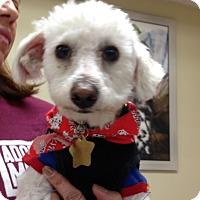 Adopt A Pet :: Dewey - Studio City, CA