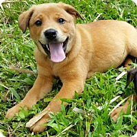 Adopt A Pet :: Eloise - Royal Palm Beach, FL