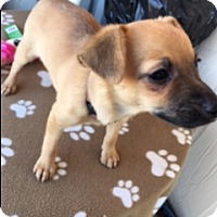 Adopt A Pet :: TIKA - Elk Grove, CA
