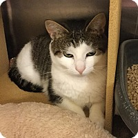 Adopt A Pet :: Cautious - Colmar, PA