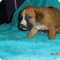 Adopt A Pet :: VOWEL PUP