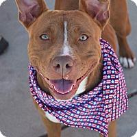 Adopt A Pet :: Mesa - Dublin, CA