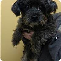 Adopt A Pet :: 16-10-3118 Ernie - Dallas, GA