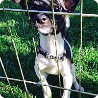 Adopt A Pet :: Priscilla - Beavercreek, OH