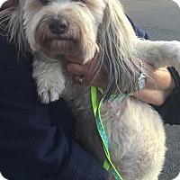 Adopt A Pet :: Abbie - Renton, WA