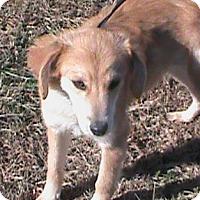 Adopt A Pet :: Curtis - Maynardville, TN