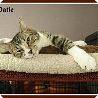 Adopt A Pet :: Oatie - New Richmond,, WI