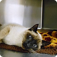 Adopt A Pet :: Paul - Redding, CA
