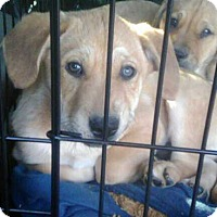 Adopt A Pet :: Sissy and Bro - Staunton, VA