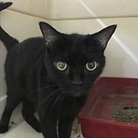 Adopt A Pet :: Baby - Saylorsburg, PA