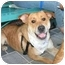 Photo 4 - Golden Retriever/Shar Pei Mix Dog for adoption in Richmond, Virginia - Buddy