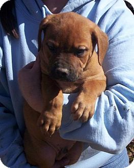French Fry | Adopted Puppy | 57468 | Danbury, CT ...