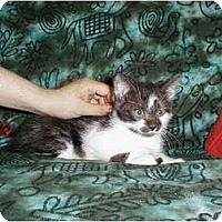 Adopt A Pet :: Warwick - Proctor, MN