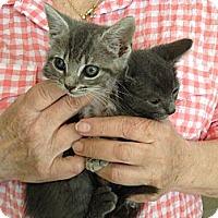 Adopt A Pet :: Lover Boy & Smokey - Island Park, NY