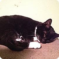 Adopt A Pet :: Emerald - East Hanover, NJ