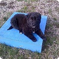 Adopt A Pet :: Pooh - Albany, NY