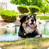 Adopt A Pet :: Brewski - Tempe, AZ