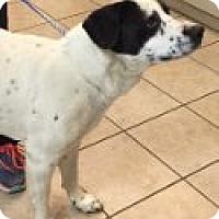Adopt A Pet :: Paw-ly - Las Vegas, NV