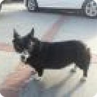 Adopt A Pet :: Boo - Lomita, CA