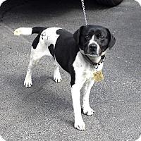 Adopt A Pet :: Clipper-Adopted! - Detroit, MI