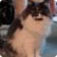 Adopt A Pet :: Lightning - Putnam, CT