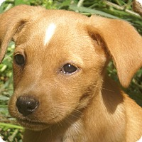Adopt A Pet :: Captain - Spring Valley, NY