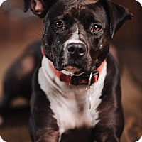 Adopt A Pet :: Lila - Portland, OR