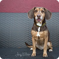 Adopt A Pet :: Carly - Drumbo, ON