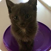 Adopt A Pet :: Grayson - Herndon, VA