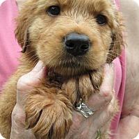 Adopt A Pet :: Autumn - Brookside, NJ