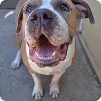 Adopt A Pet :: Rex - San Diego, CA