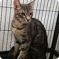 Adopt A Pet :: Matt Murdock - Fallbrook, CA