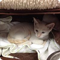 Adopt A Pet :: Leling - Tehachapi, CA