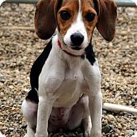 Adopt A Pet :: Nako - Lacon, IL