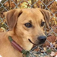 Adopt A Pet :: Rabbit - Hagerstown, MD