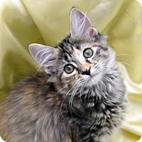 Adopt A Pet :: Flora Stevenson - Chattanooga, TN