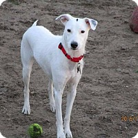 Adopt A Pet :: Scout - Freeport, NY