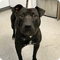 Mixed Breed (Large) Mix Dog for adoption in New Castle, Delaware - Puma