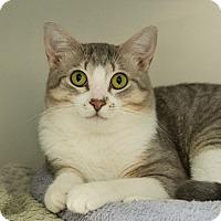 Adopt A Pet :: Yertle - Houston, TX