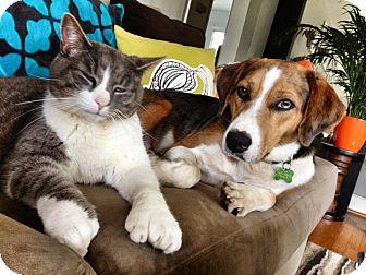Catahoula Leopard Dog Mix Dog for adoption in Richmond, Virginia - Finn (photolink)