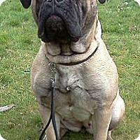 Adopt A Pet :: Winnie - Roy, WA