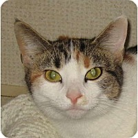 Adopt A Pet :: MILLY - Hamilton, NJ