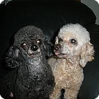 Adopt A Pet :: Alfie - Cantonment, FL