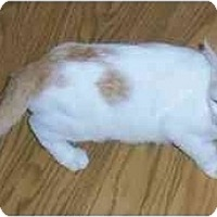 Adopt A Pet :: Spotty - Odenton, MD