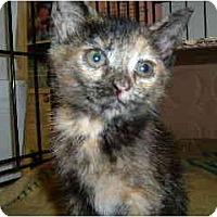 Adopt A Pet :: Lacy - Island Park, NY