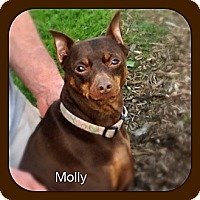 Adopt A Pet :: Molly (Courtesy) - Malaga, NJ