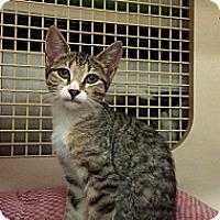 Adopt A Pet :: Daryl - Stafford, VA