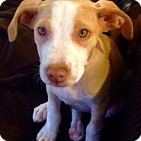 Adopt A Pet :: Zailey - North Bend, WA