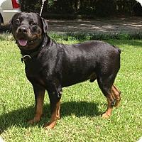 Adopt A Pet :: Dr Bruno - Alachua, GA